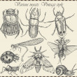 Vector set insects in vintage style — Stock Vector #37069537