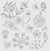 Set flowers hand drawn vector — Stock Vector