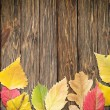 Autumn leaves — Stock Photo #12377049