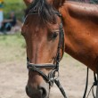 Beautiful horse — Stockfoto
