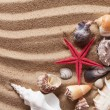 Seashells — Stock Photo #12386241