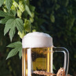 Stock Photo: Beer and hop