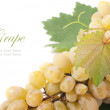 Grapes branch — Stock Photo #14437273