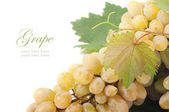 Grapes branch — Stock Photo