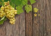 Winorośli — Zdjęcie stockowe