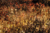 Fall Field — Stockfoto