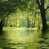Sunbeam in green forest with water — Stock Photo