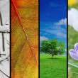Four seasons — Stockfoto