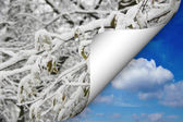 Summer winter — Stock Photo