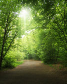 Trees in a summer forest — Stock Photo