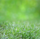 Green Background With Blur And Grass — Stock Photo