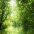 Stock Photo: Sunbeam in green forest with water
