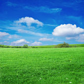 Grass field with cloudy sky — Stock Photo