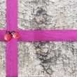 Ribbon for gift wrap — Stock Photo