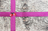 Ribbon for gift wrap — Stockfoto