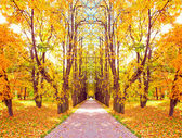 Beautiful diminishing alley in autumnal golden orchard — Stock Photo