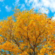Vivid autumnal leafage over blue sky — Stock fotografie
