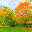 Vivid autumnal leafage over blue sky — ストック写真