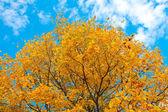 żywe jesienny liść nad niebieski niebo — Zdjęcie stockowe