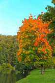 Vivid autumnal leafage over blue sky — Stockfoto