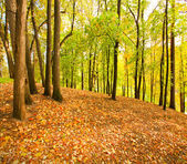 Beautiful autumnal forest — Stock Photo