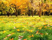 Beautiful colorful autumn park in sunny day — Stock Photo