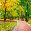 Stock Photo: Colorful autumnal forest
