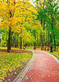 Colorful autumnal forest — Stock Photo