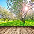 Bright beautiful light blooming rural apple trees alley in sunny spring park over blue sky with first dawn rays on the wall inside room interior with frame textured wooden panel floor background — Stock Photo