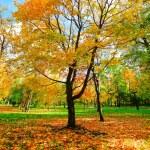 Beautiful autumn park — Stock Photo #25206305