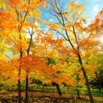 Beautiful autumn park — Stock Photo #25206427