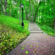 Beautiful park alley in spring — Stock Photo