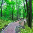 Beautiful park alley in spring — Stock Photo #25206697
