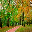 Beautiful autumn park — Stock Photo #25206825