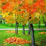 Beautiful autumn park — Stock Photo #25207075