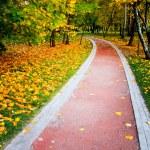 Beautiful autumn park — Stock Photo #25207389