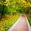 Beautiful autumn park — Stock Photo #25207585