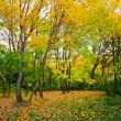 Beautiful autumn park — Stock Photo