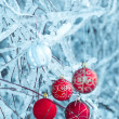 Beautiful Christmas red balls over snowy branches — Photo
