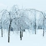 Snowy park — Stock Photo