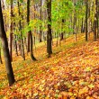 Colourful forest — Stock Photo #25212185