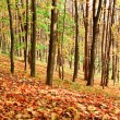 Colourful forest — Stock Photo