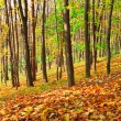 Colourful forest — Stock Photo #25212533