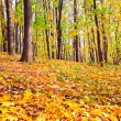 Colourful forest — Stock Photo #25212767