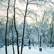 Beautiful winter forest snowy park — Stock Photo