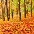Stock Photo: Colourful forest