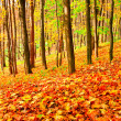 Colourful forest — Stock Photo #25248125