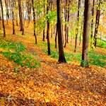 Birch trees in beautiful autumn park — Stock Photo #25248459