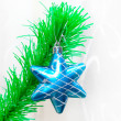 Single star over bright green branch — Stock Photo