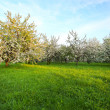 Beautiful blooming of apple and fruit trees — Photo